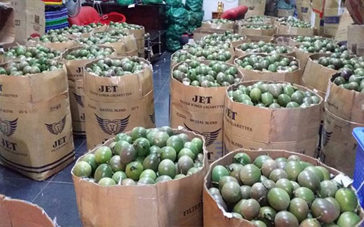Lemon wire export to china