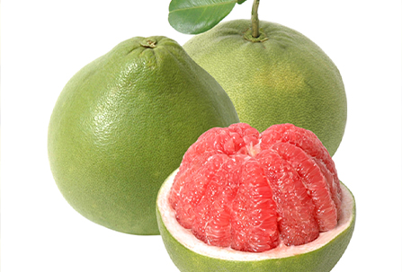 Grapefruit Export