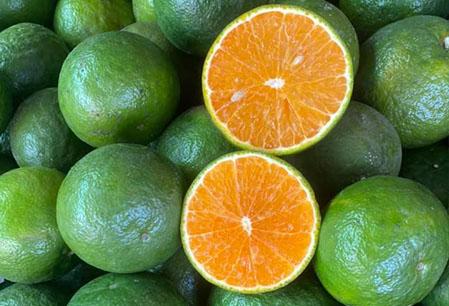 Orange Vinh Long